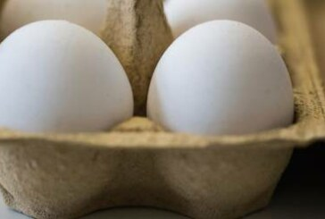 Widening egg scandal hits 17 countries in Europe