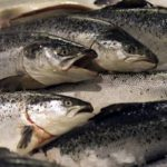 Special Delivery: Norway to Try Transport Hyperloop for Salmon