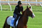 Duretto ruled out of the Melbourne Cup