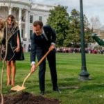 Tree planted at White House by Presidents Donald Trump and Emmanuel Macron dies