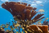Dire state of coral reefs highlighted by first-ever World Reef Day