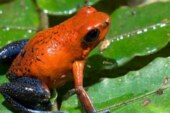 These frogs are surviving rising temperatures for now, but they have a limit