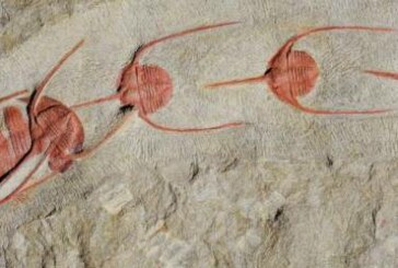 Queuing for eternity: Fossils show lining up is primal urge